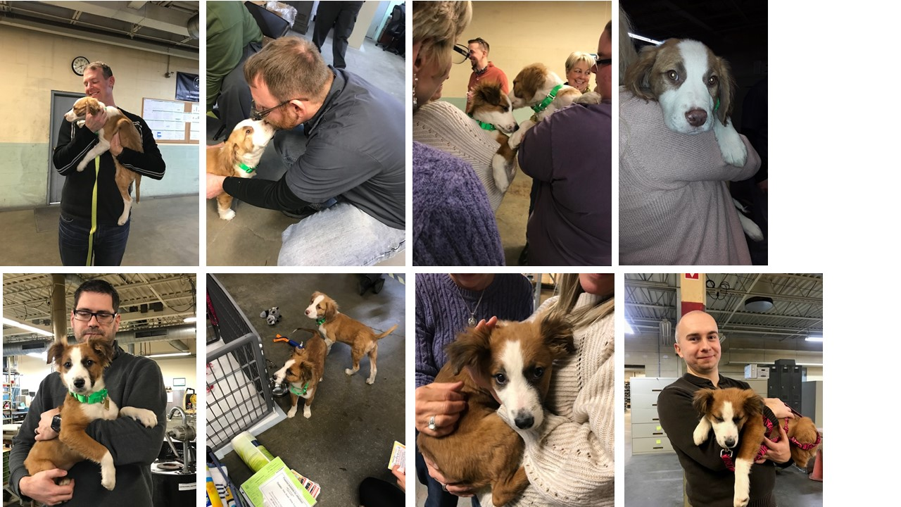 "A collection of images of a Solon ""puppy party"", Solon employees cuddling up with puppies"